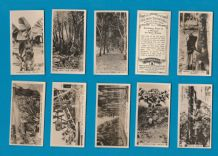 Collectable Cigarette cards set Malayan Industries 1929